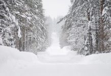Best ATVs For Plowing Snow